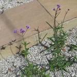 Self-Seeded-Plants