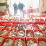 Newlyn Fish Market | Cornwall